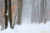 Winter Mist Along Cuttalossa - Note / Holiday Card