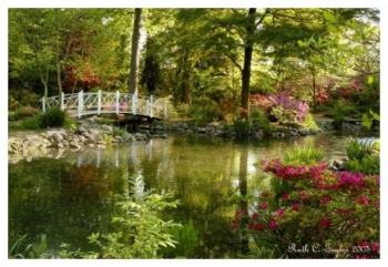 Magical Morning at Sayen Pond - Sayen Gardens, NJ