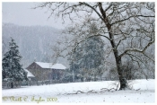 Snowy Morning at Thompson Neely Farm - Holiday Card