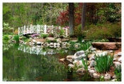 Azalea Bridge - Sayen Gardens, NJ