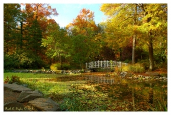 Magical Autumn Light - Sayen Gardens, NJ