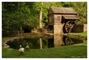 Summer At Bromley Mill - Cutalossa Farm, PA
