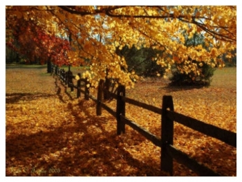 Autumn at Tinicum Park - Erwinna, PA