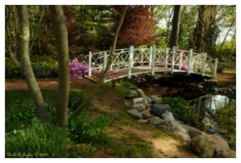 Path To The Bridge - Sayen Gardens, NJ