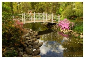 Azalea Festival Morning - Sayen Gardens, NJ