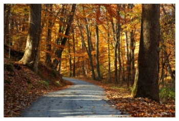 Autumn Along Cutalossa Road - New Hope, PA