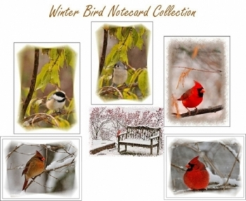 Winter Bird Collection - 6 Note Cards