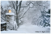 Light the Winter Path - Holiday Card