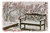 Winter Garden - Holiday Card